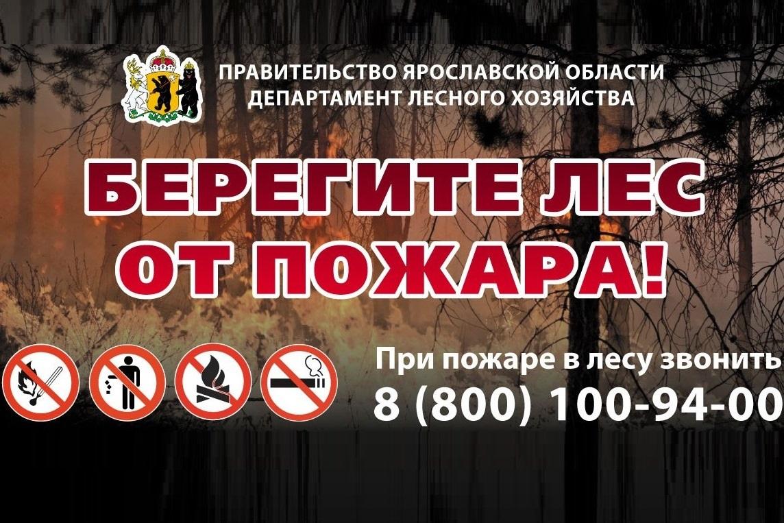 На землях лесного фонда области указом Дмитрия Миронова введен особый противопожарный режим