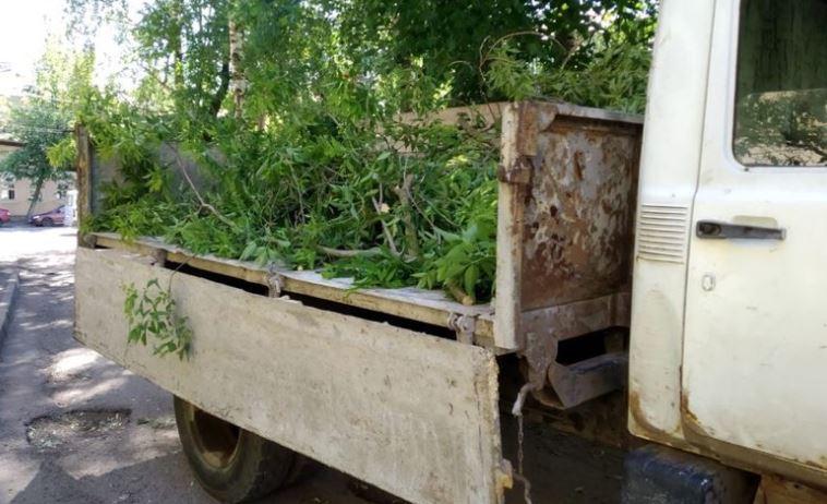 После поста в соцсетях из ярославского двора вывезли дерево