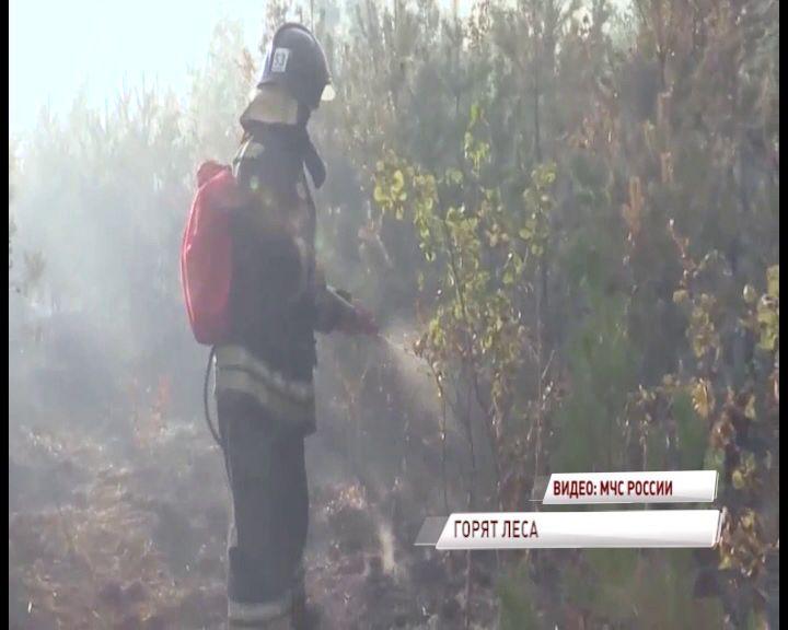 В Рыбинском районе введен высший класс пожароопасности