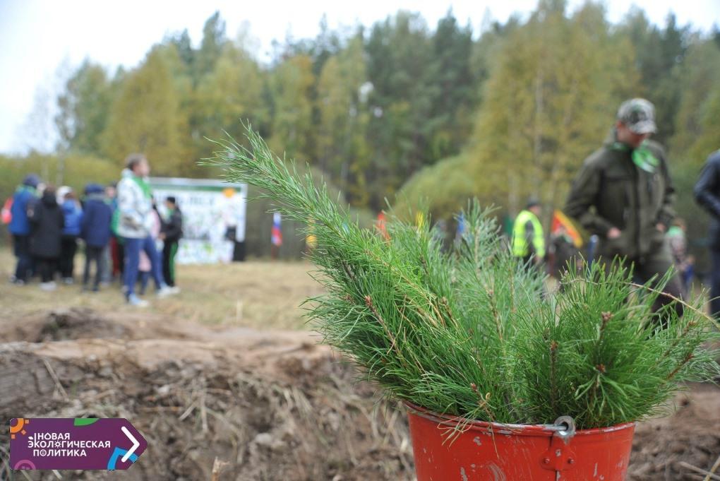 Около 60 тысяч деревьев высадили в Ярославской области