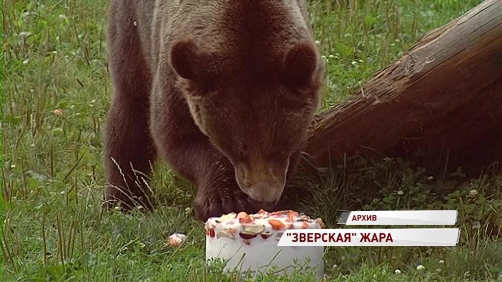 Пломбир на завтрак и холодный душ в обед: как животные в зоопарках переживают жару