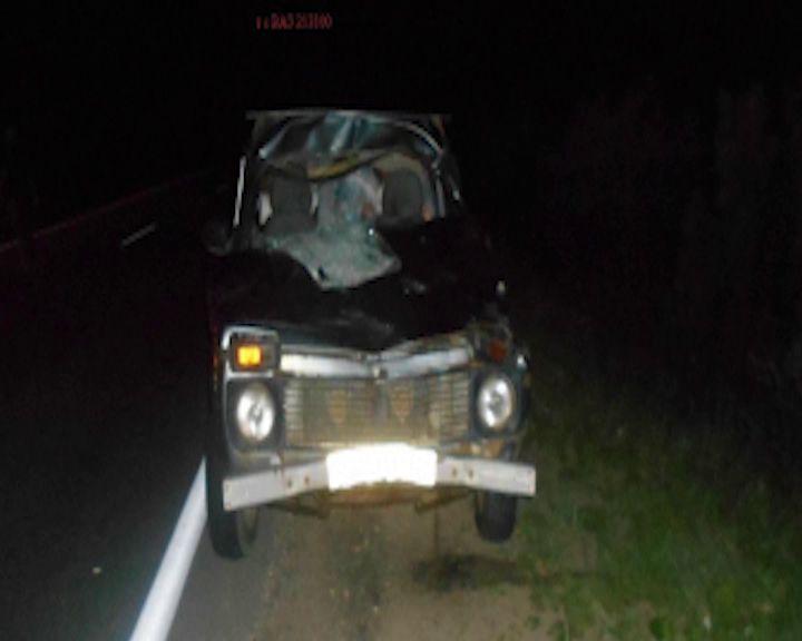 Внедорожник сбил лося в Угличском районе: пострадал ребенок