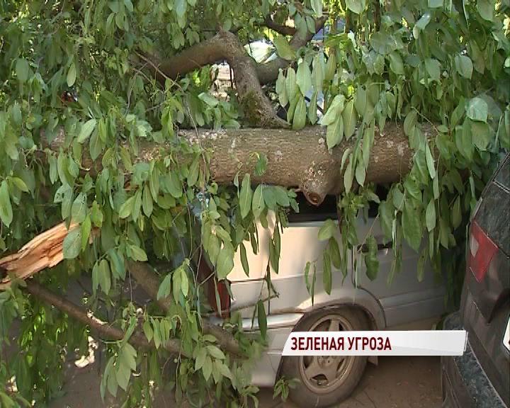 Видео: Огромное дерево рухнуло во дворе жилого дома