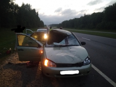 На трассе Москва-Холмогоры водитель на «Ладе» сбил лося