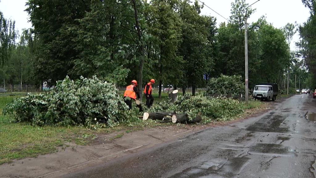 На проспекте Дзержинского началось благоустройство: разбираем, зачем пилят деревья