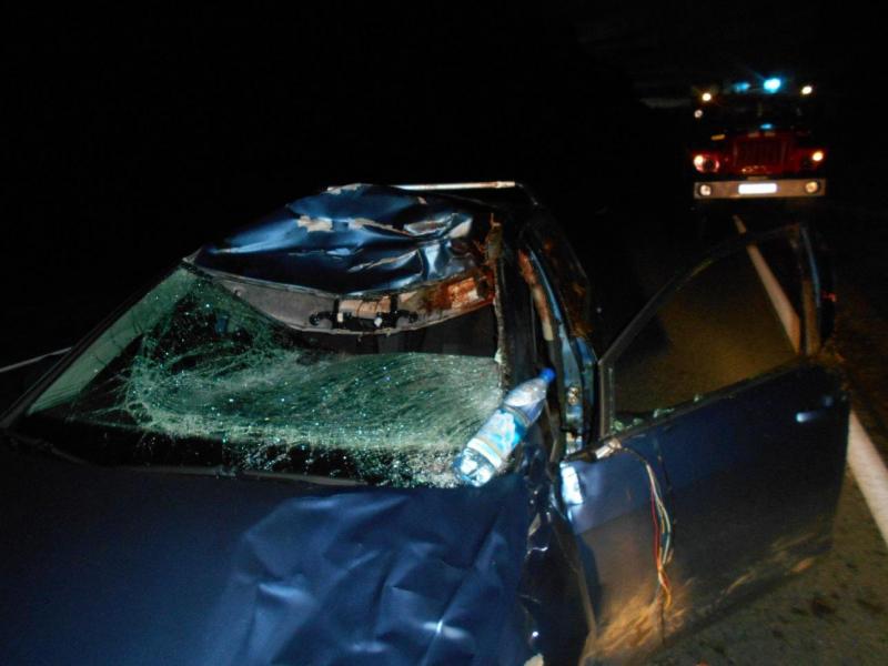 В ДТП с лосем в Угличском районе пострадал молодой водитель
