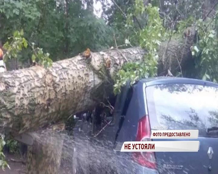 В Ярославле из-за сильного ветра попадали деревья