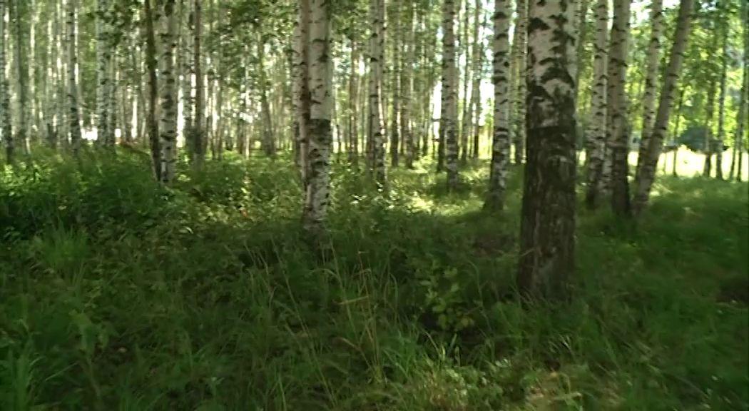 Глава Рыбинска взял под личный контроль дело о возможной застройке березовой рощи