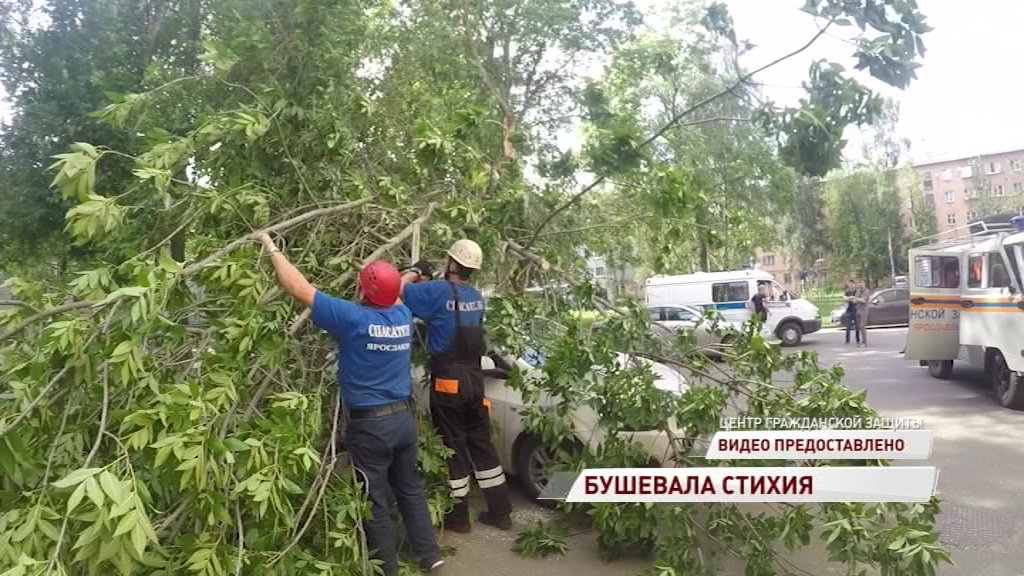В центре Ярославля ветер повалил дерево на припаркованную машину