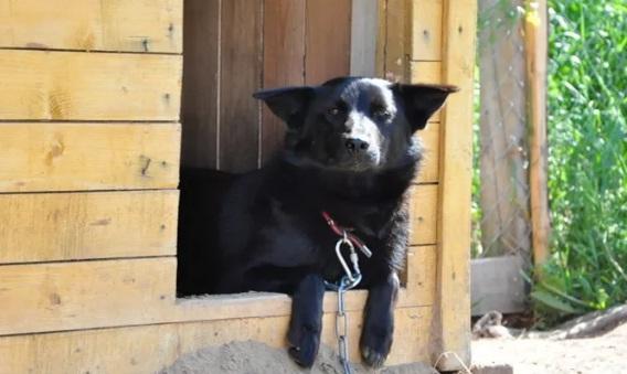 Порядок организации деятельности приютов не затрагивает благотворительные фонды и места временного содержания животных- департамент ветеринарии