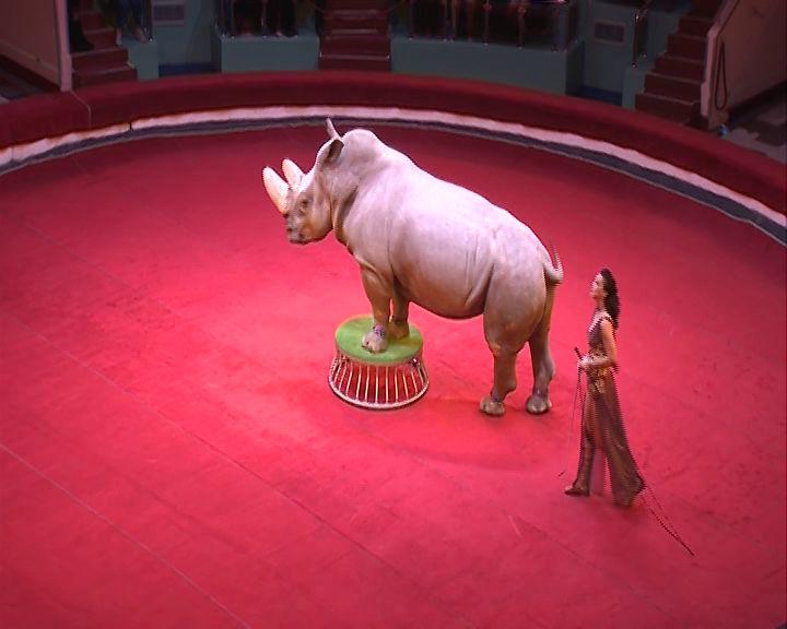 Носорог, жираф и верблюды продолжат радовать детей и взрослых в Ярославском цирке