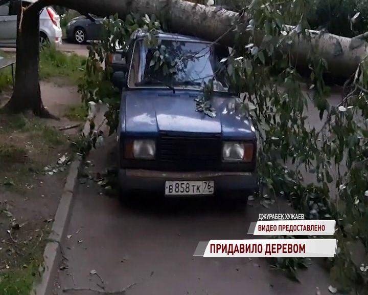 На Тутаевском шоссе на легковушку рухнуло дерево