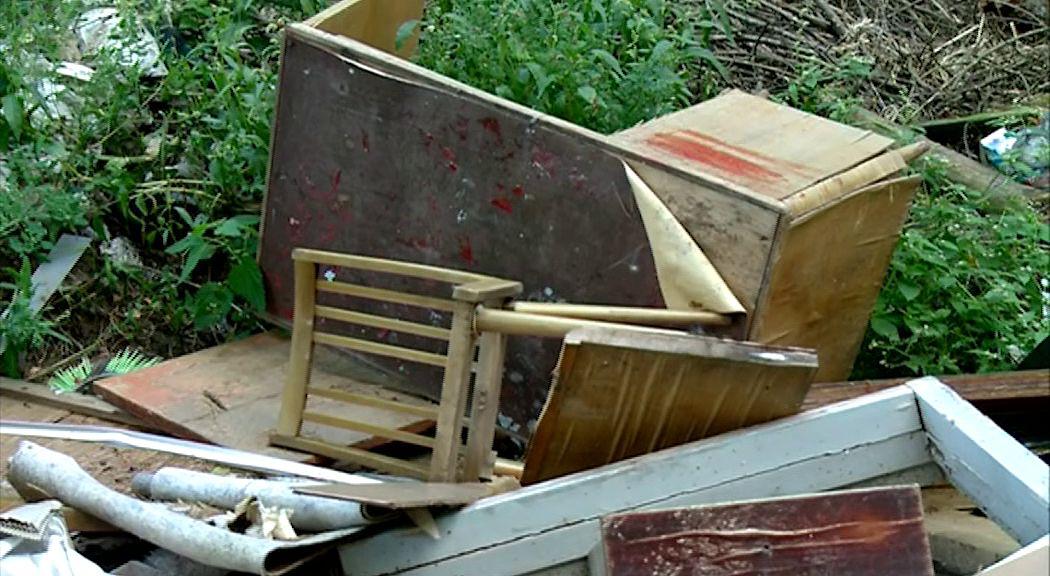 В дубраве под Ярославлем нашли свалку: какие меры будут приняты