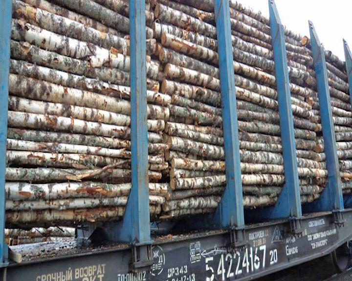 Ярославские таможенники «накрыли» контрабандистов, везущих березу в Китай