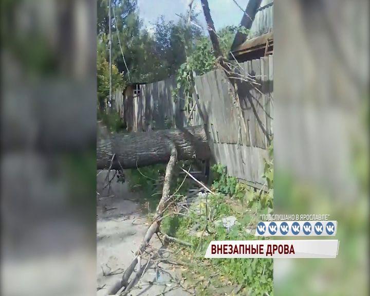 В Ярославле огромное дерево оборвало линию электропередач