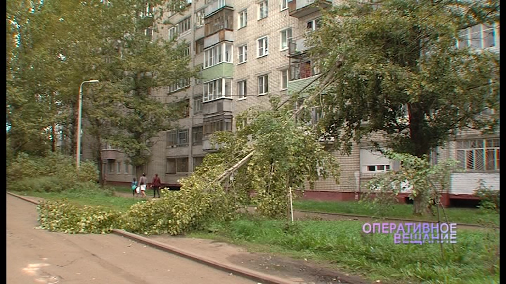 В Брагине дерево упало прямо на электрические провода
