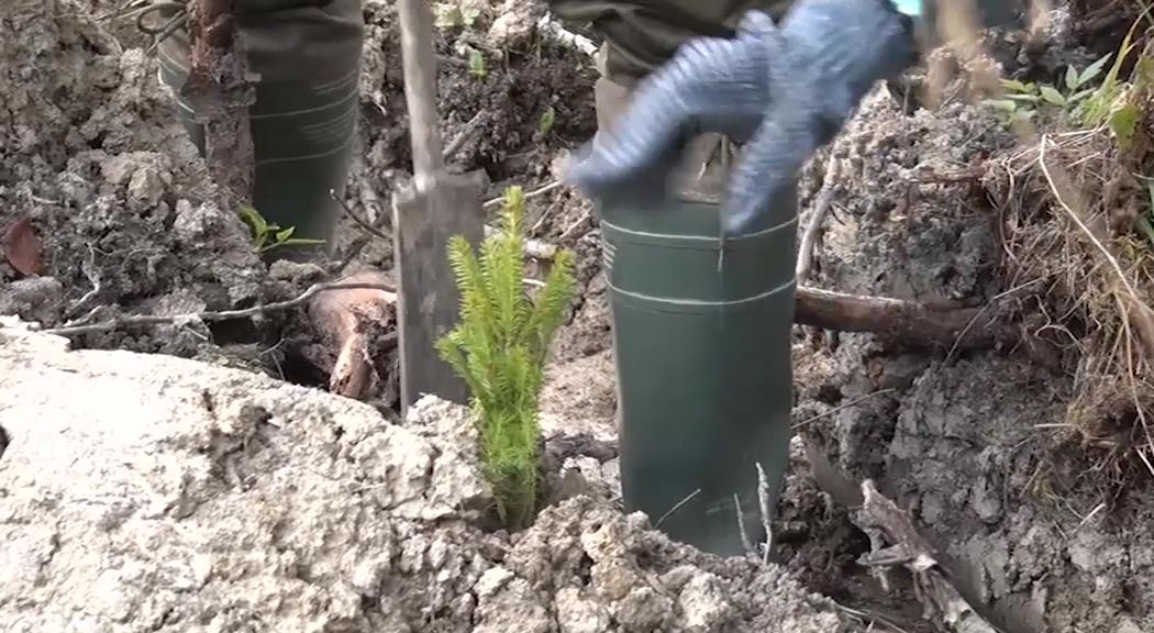 В регионе посадят полмиллиона саженцев деревьев в рамках экологической акции