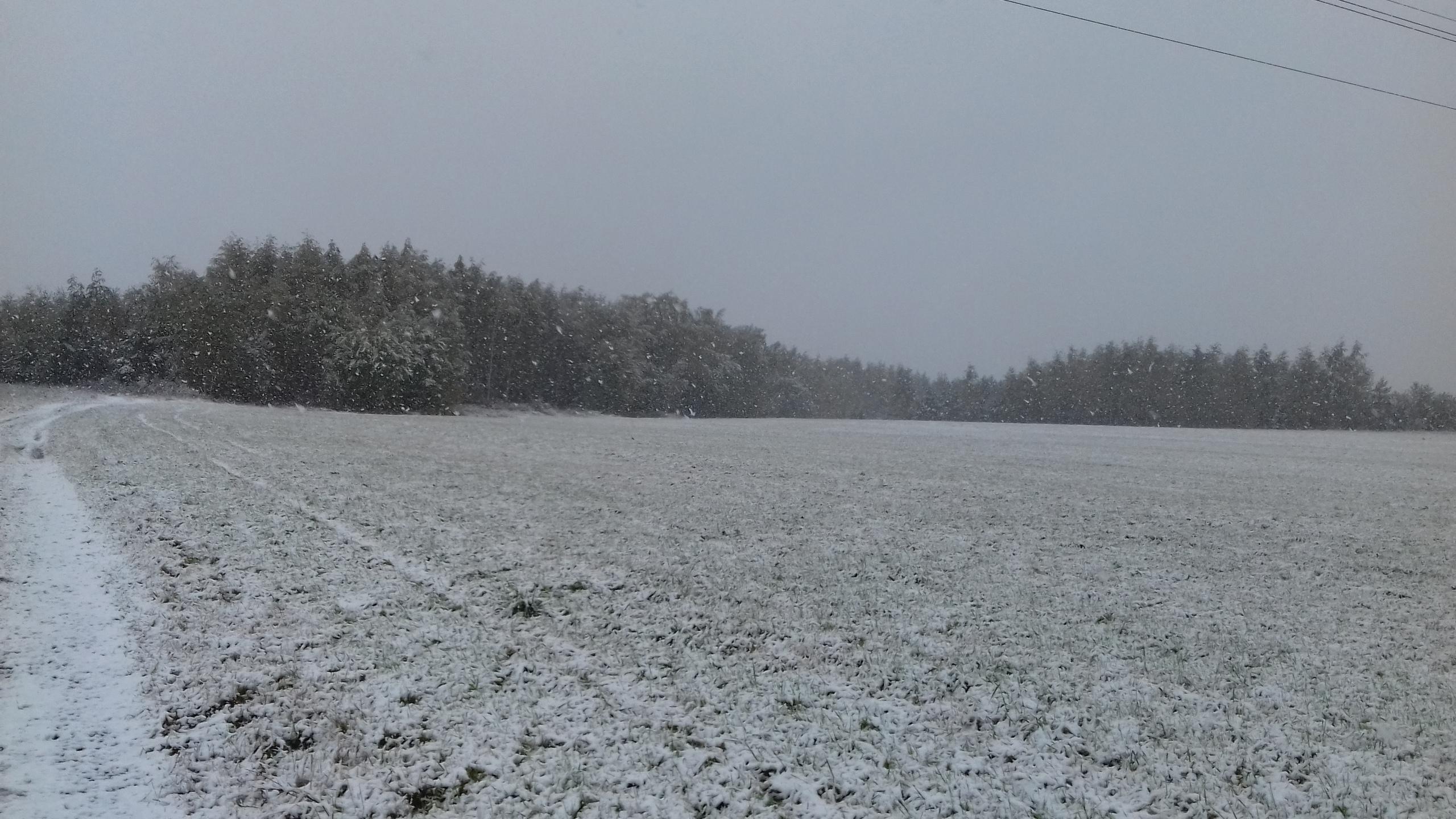 Пора менять резину? В Ярославской области выпал снег