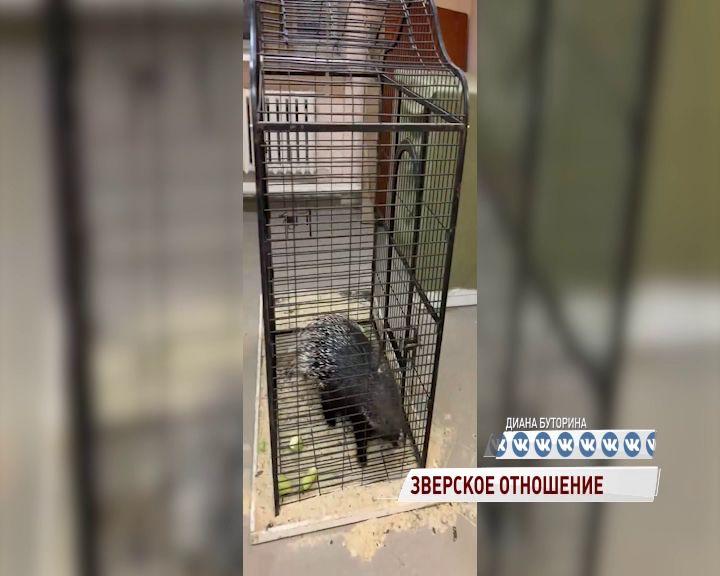 Ярославский зоопарк может принять часть брошенных в Архангельской области животных