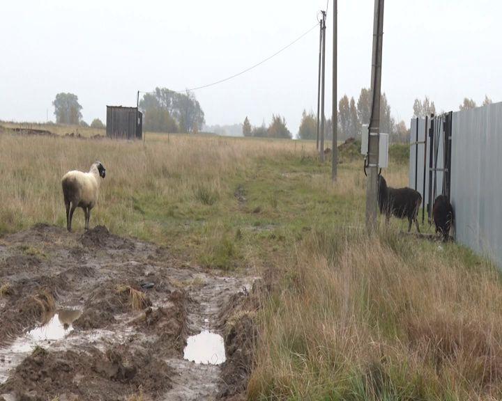 Жители Заволжского района не могут добраться до дома из-за отсутствия дороги