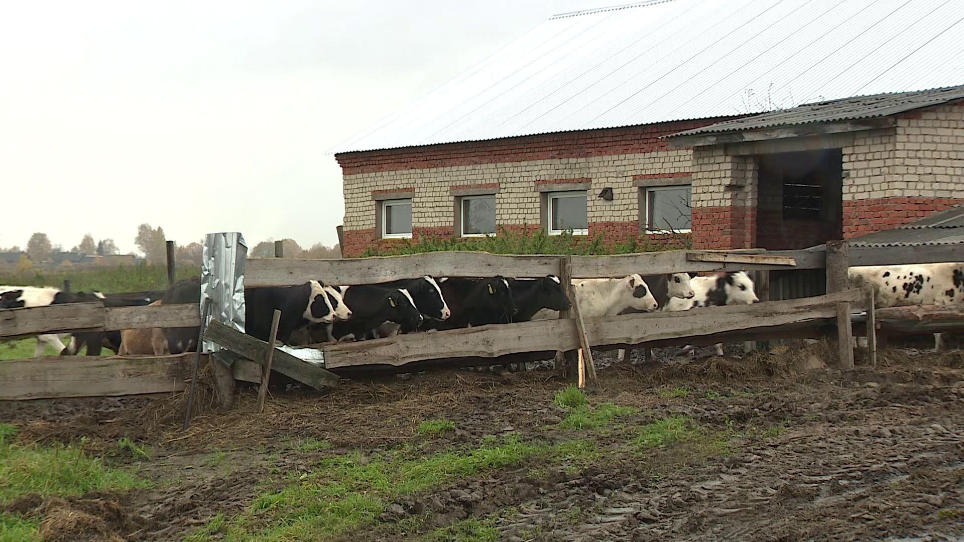 Государственный грант на развитие фермерского хозяйства в Ярославской области могут получить разные отрасли