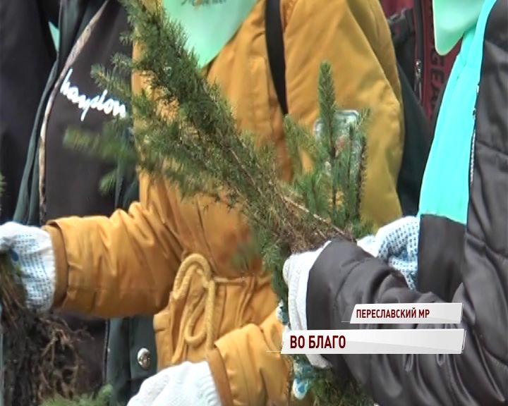 В деревне Кулаково волонтеры высадили 12 тысяч молодых елей