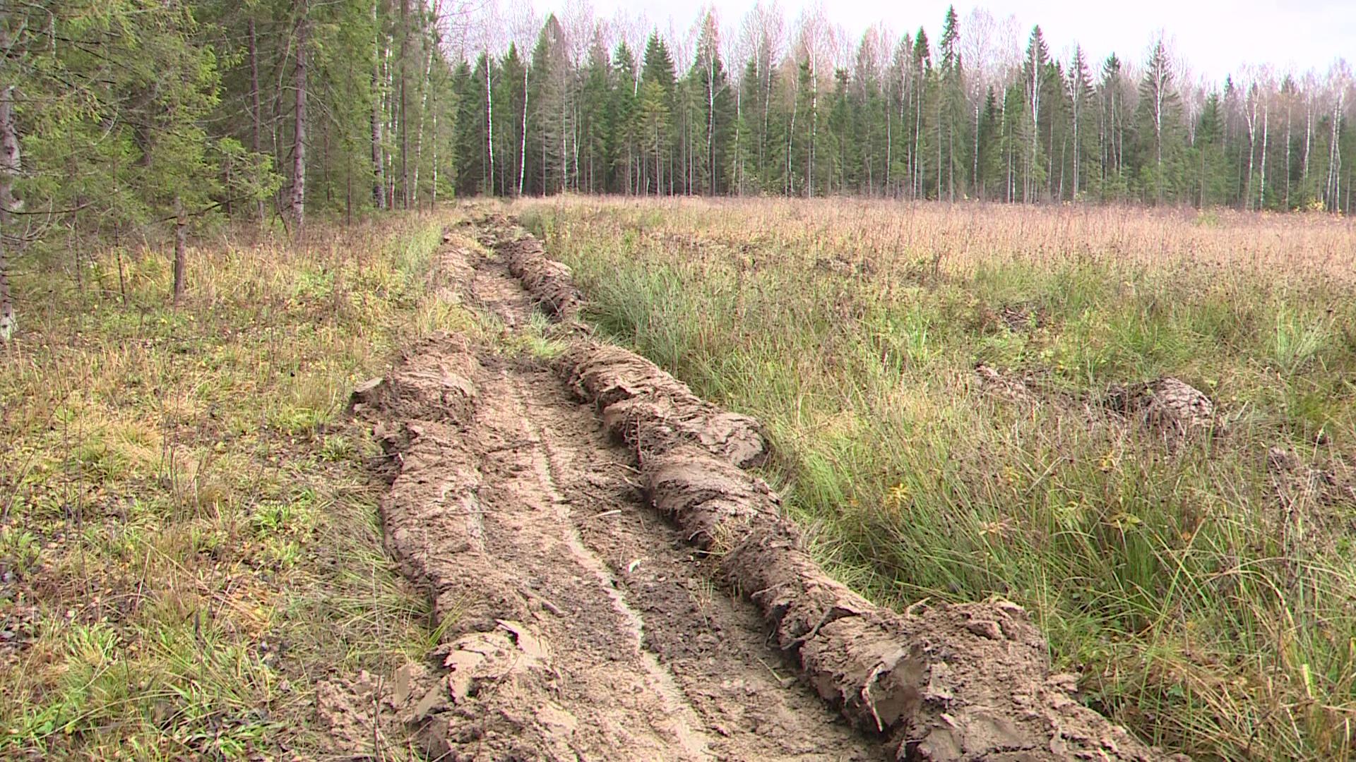 В регионе соотношение воспроизводства лесов и площадей вырубок приближается к ста процентам