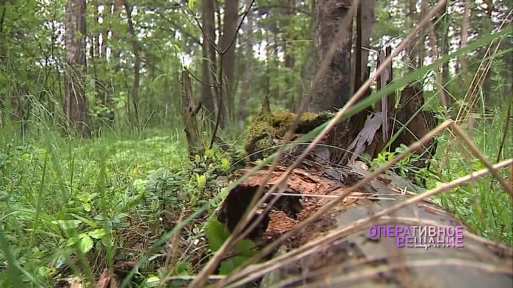 Власти проведут расследование по факту обнаружения незаконной свалки в районе Туношны