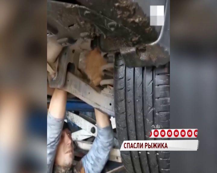 Мастера ярославского автосервиса спасли котенка из металлической ловушки