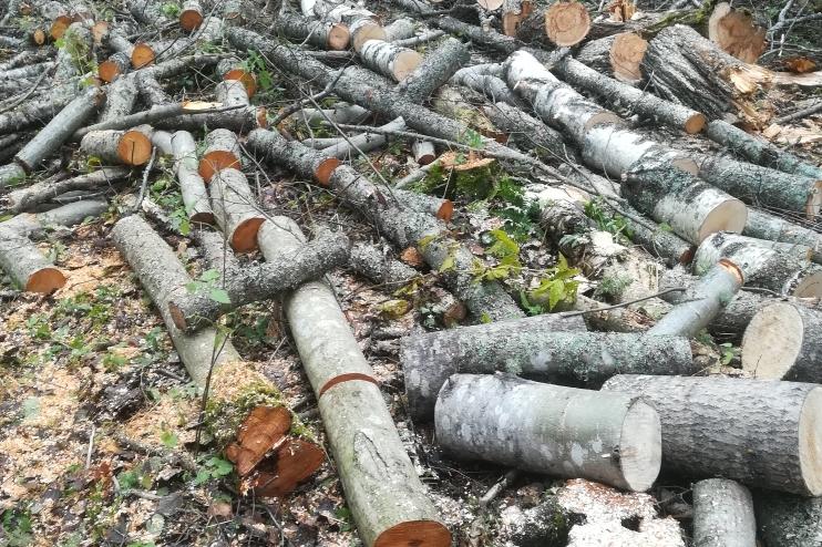 Количество незаконных рубок в Ярославской области сократилось в три раза