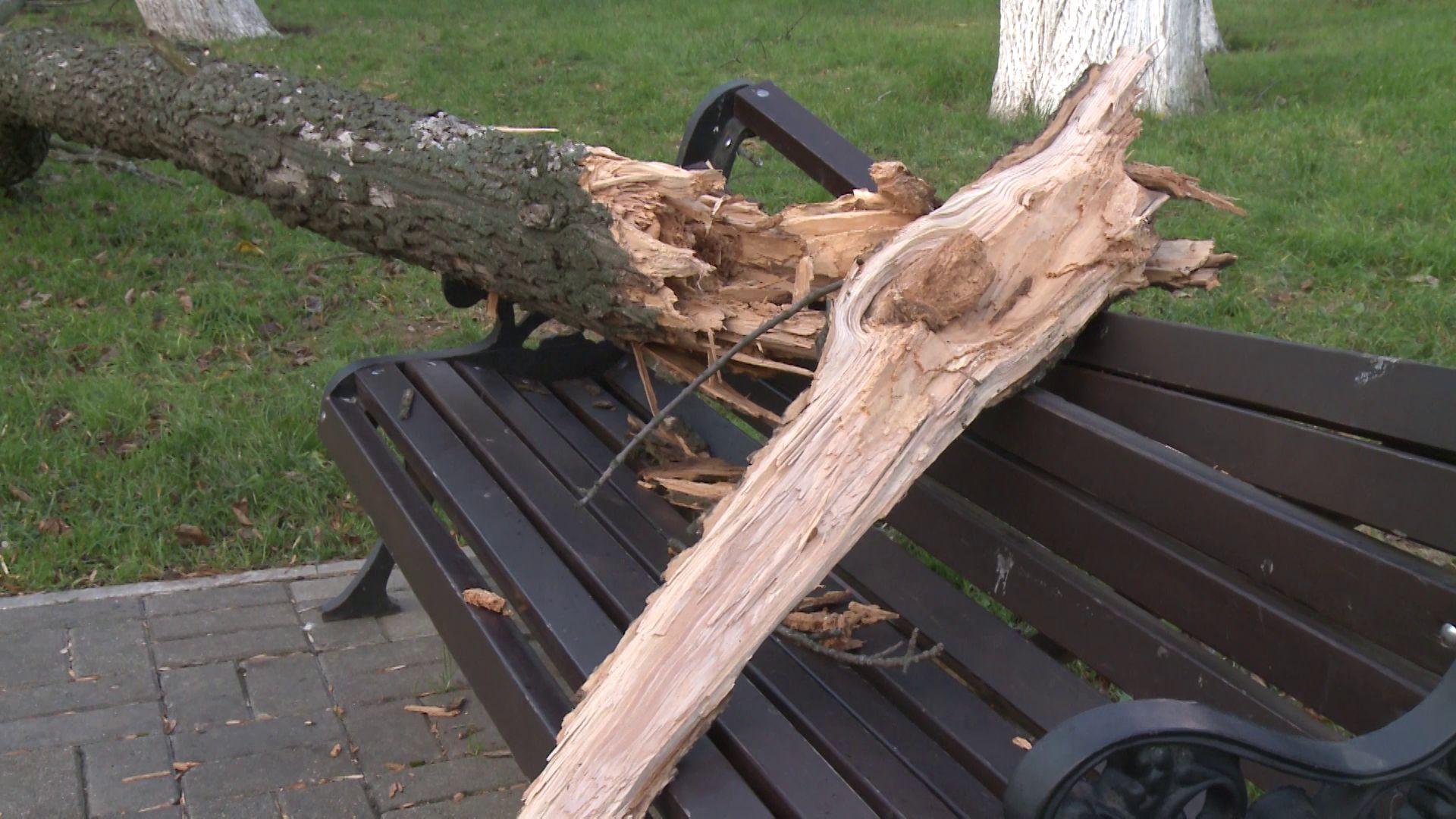 Последствия урагана в Ярославле: поваленные деревья, разбитые машины и снесенные остановки
