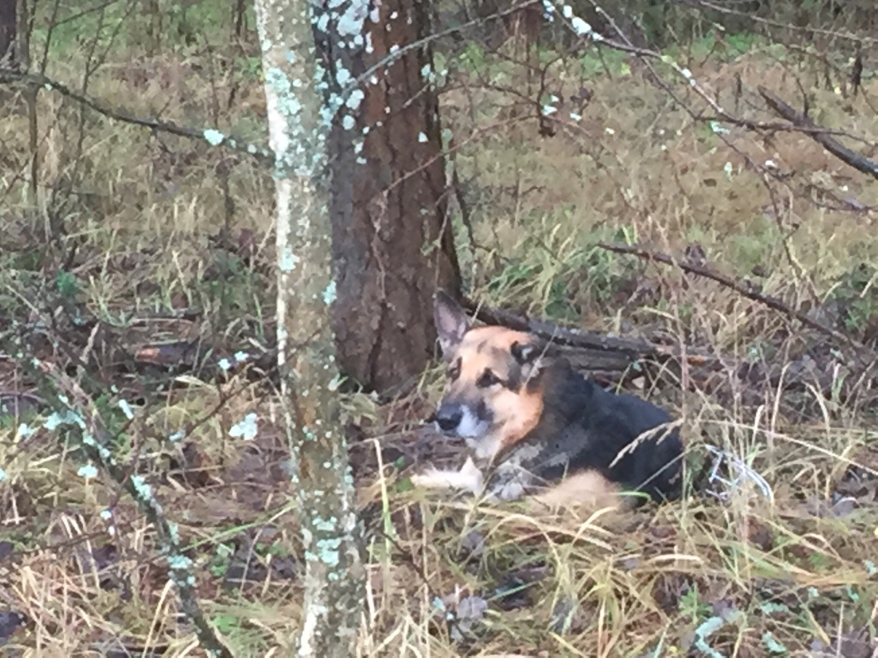 В Ярославле нашли дом для брошенного в лесу пса