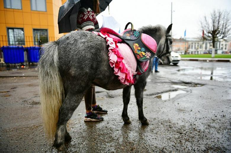 Чем опасно катание на лошадях в городе: в Ярославле искали незаконных предпринимателей