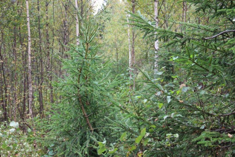 В Ярославской области 38 арендаторов лесных участков привлечены к ответственности