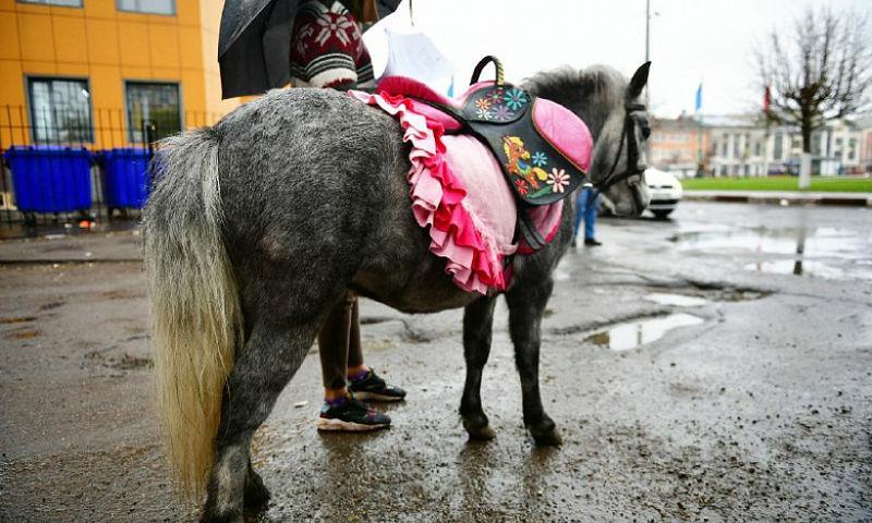Власти Ярославля обвинили лошадей в порче городского имущества