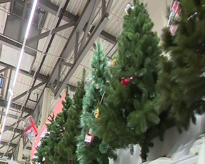 Специалисты рассказали, как выбрать новогоднюю елку