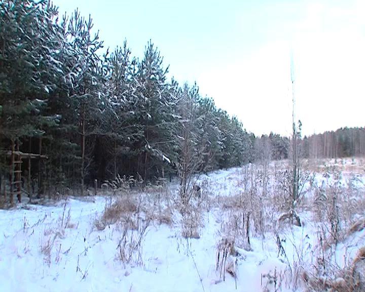 В Ярославской области за самостоятельную вырубку елей придется заплатить большой штраф