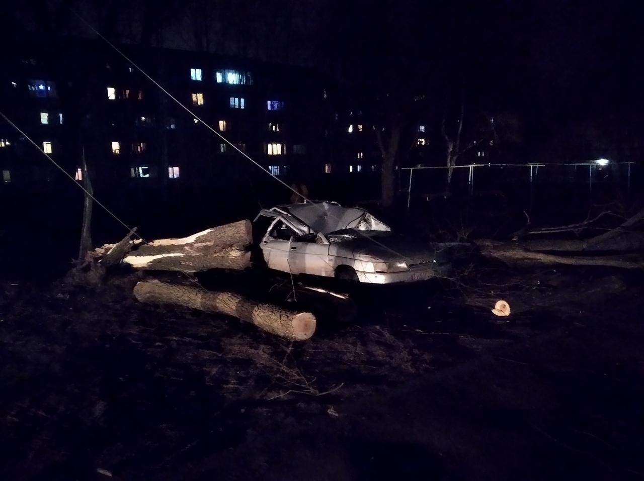 В Ярославле огромный тополь расплющил легковушку