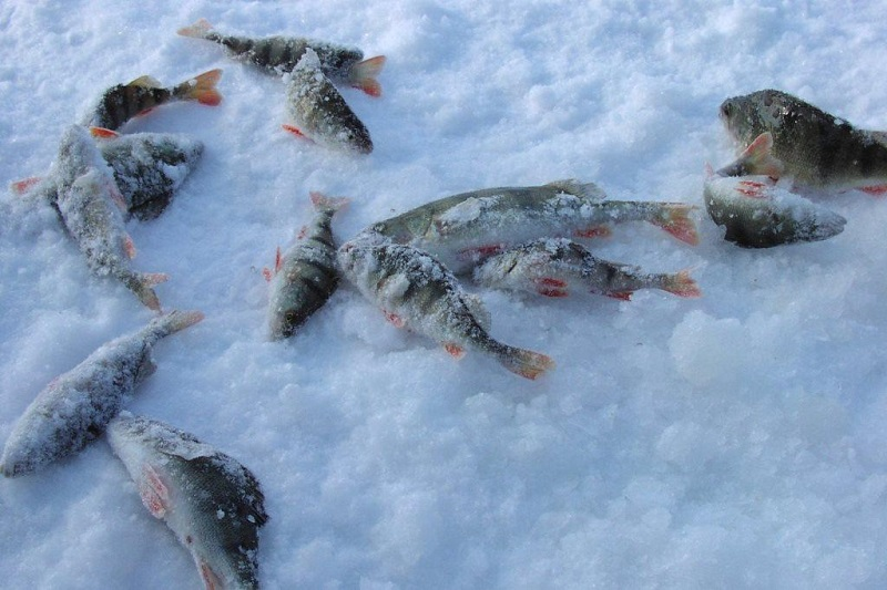 Любительская рыбалка: какие нововведения будут в 2020 году