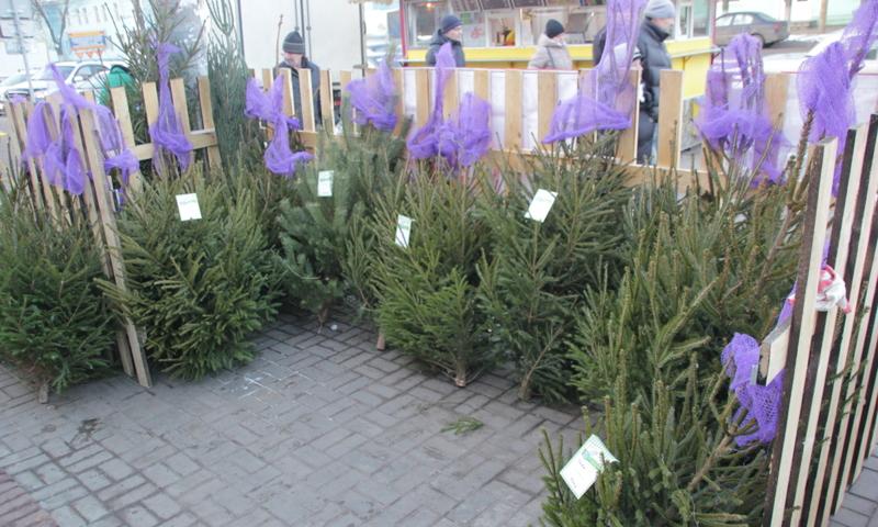 В Ярославской области открылись первые елочные базары