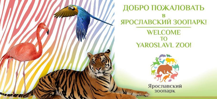 В Ярославский зоопарк привезут львицу, которую отняли у фотографа