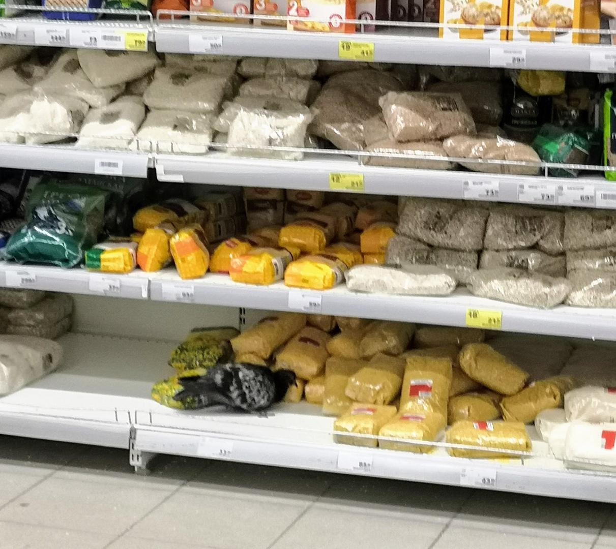 Голубь устроил себе пир на прилавках рыбинского супермаркета
