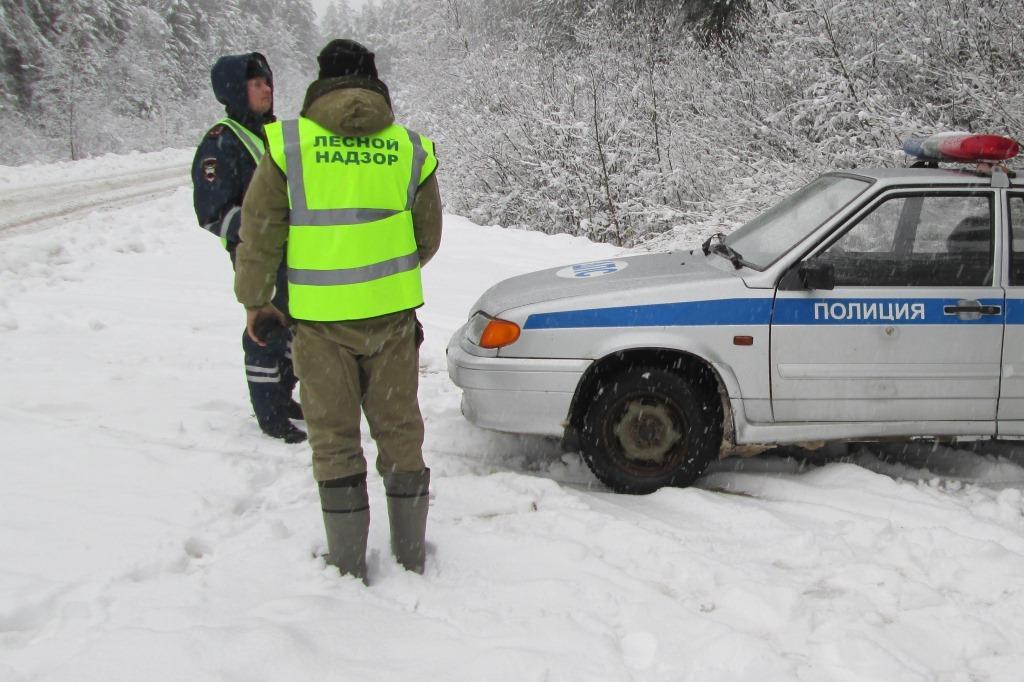 В Ярославской области во время новогодних праздников не допустили незаконную вырубку елей