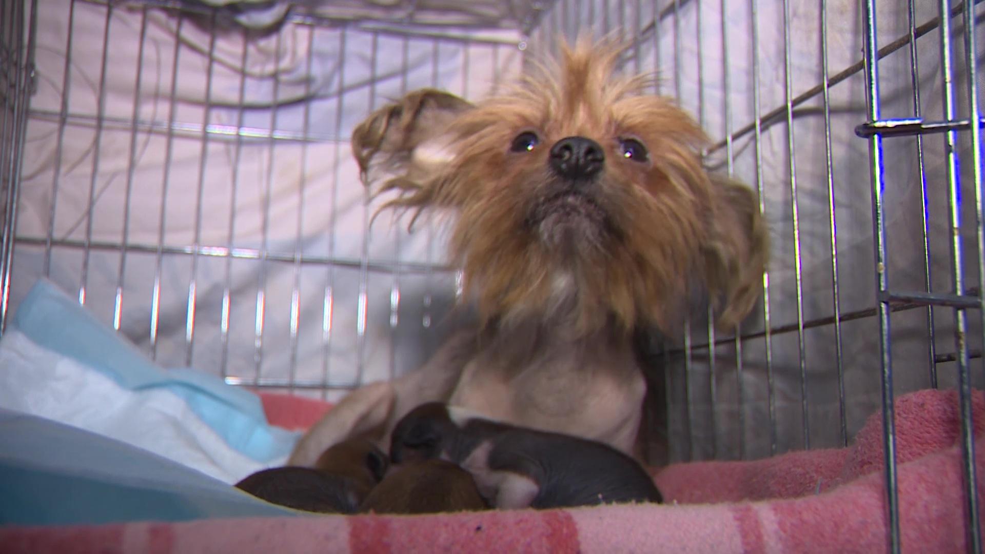 Пожар в ярославской квартире помог спастись собакам, жившим в антисанитарных условиях без еды