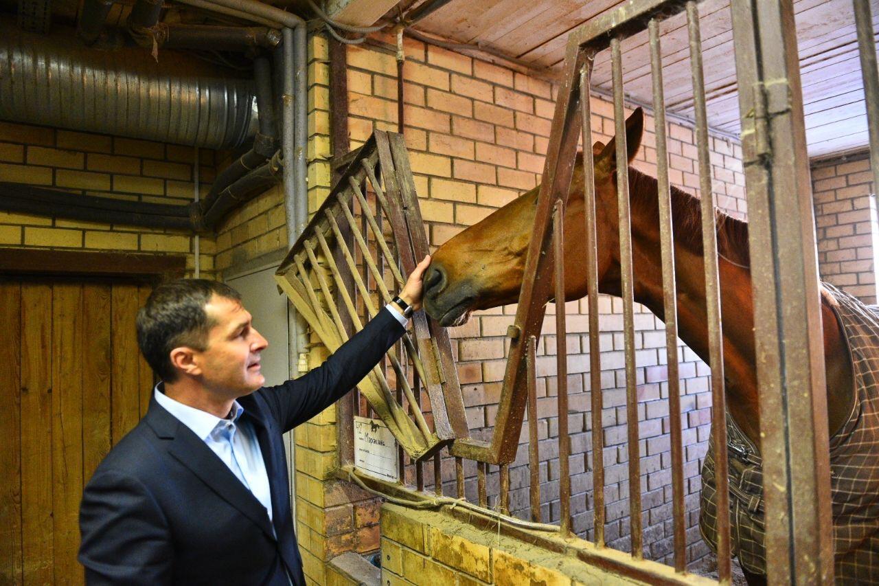 Мэр проверил состояние лошадей после информации о плохом содержании животных в спортшколе