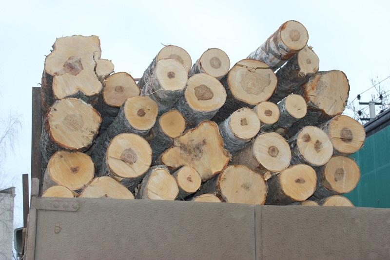 В Ярославской области с начала года прошло 60 рейдов по контролю за транспортировкой древесины