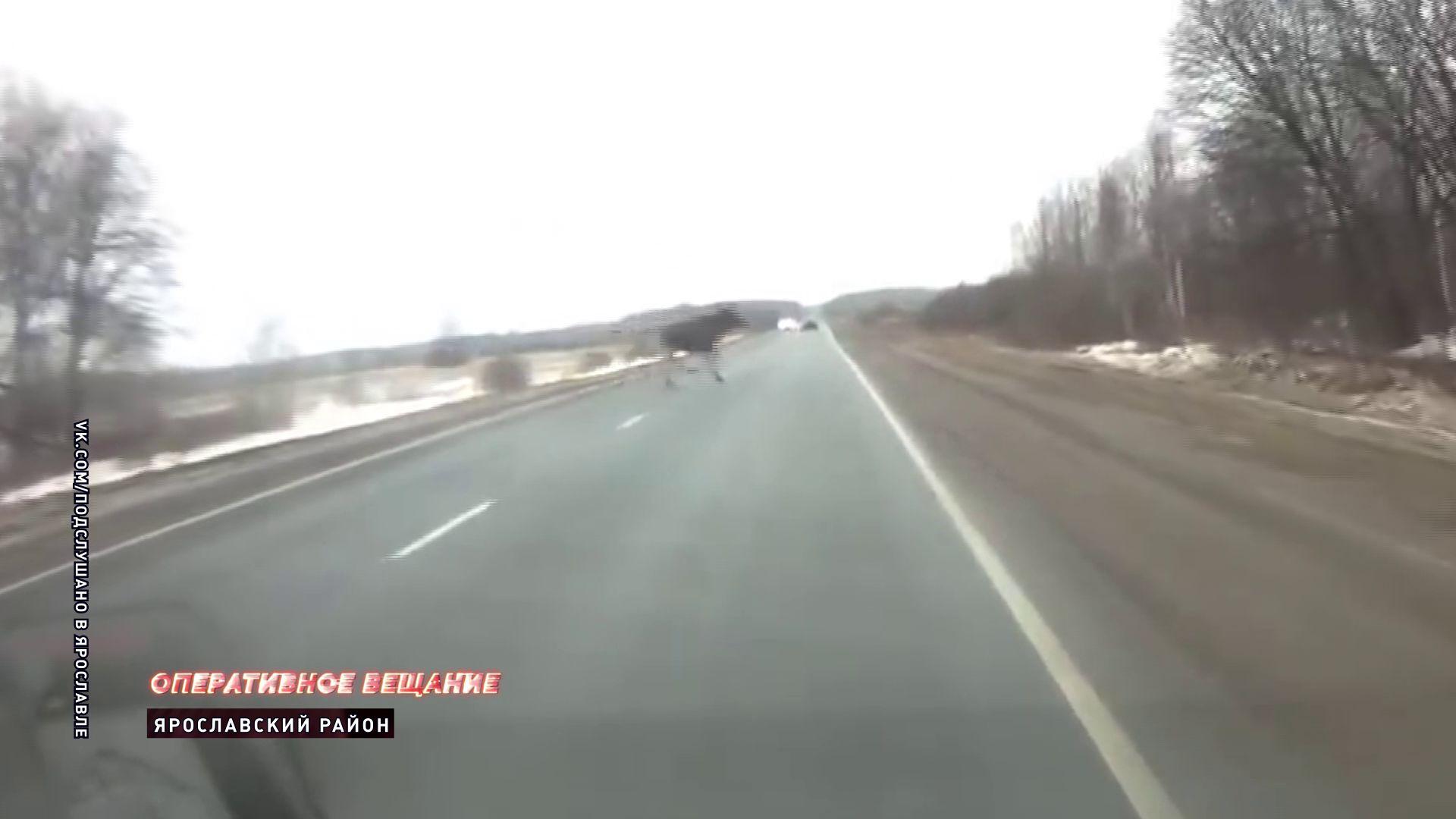 В Ярославской области лось едва не устроил ДТП