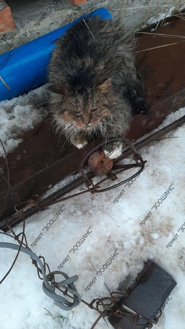 В Ярославской области неизвестный ловит капканами бездомных котов