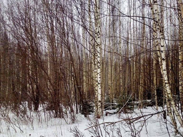 В Ярославской области проверят целевое использование 1300 земельных участков