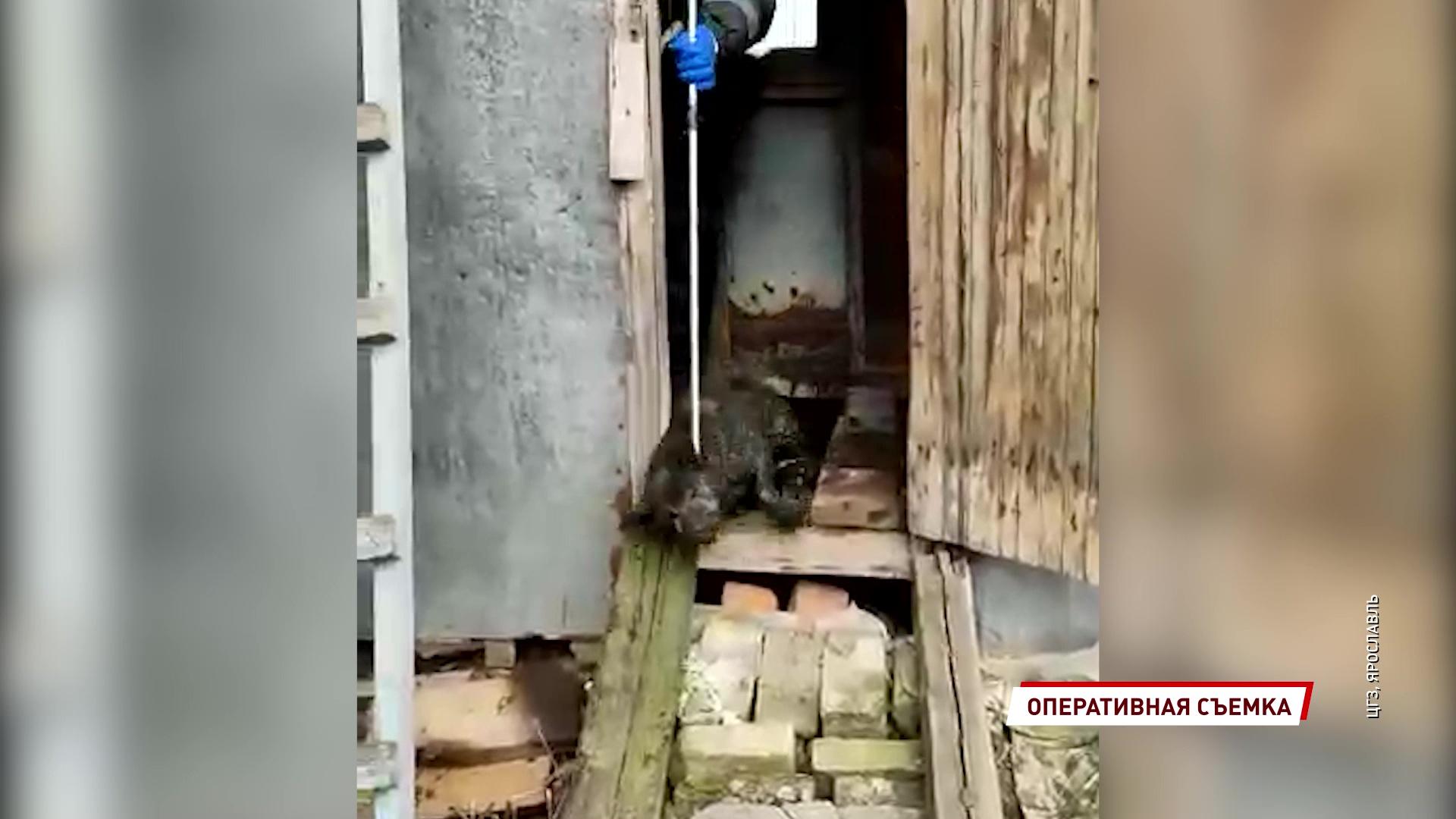 Сотрудники ЦГЗ спасли застрявшую в заброшенном доме собаку